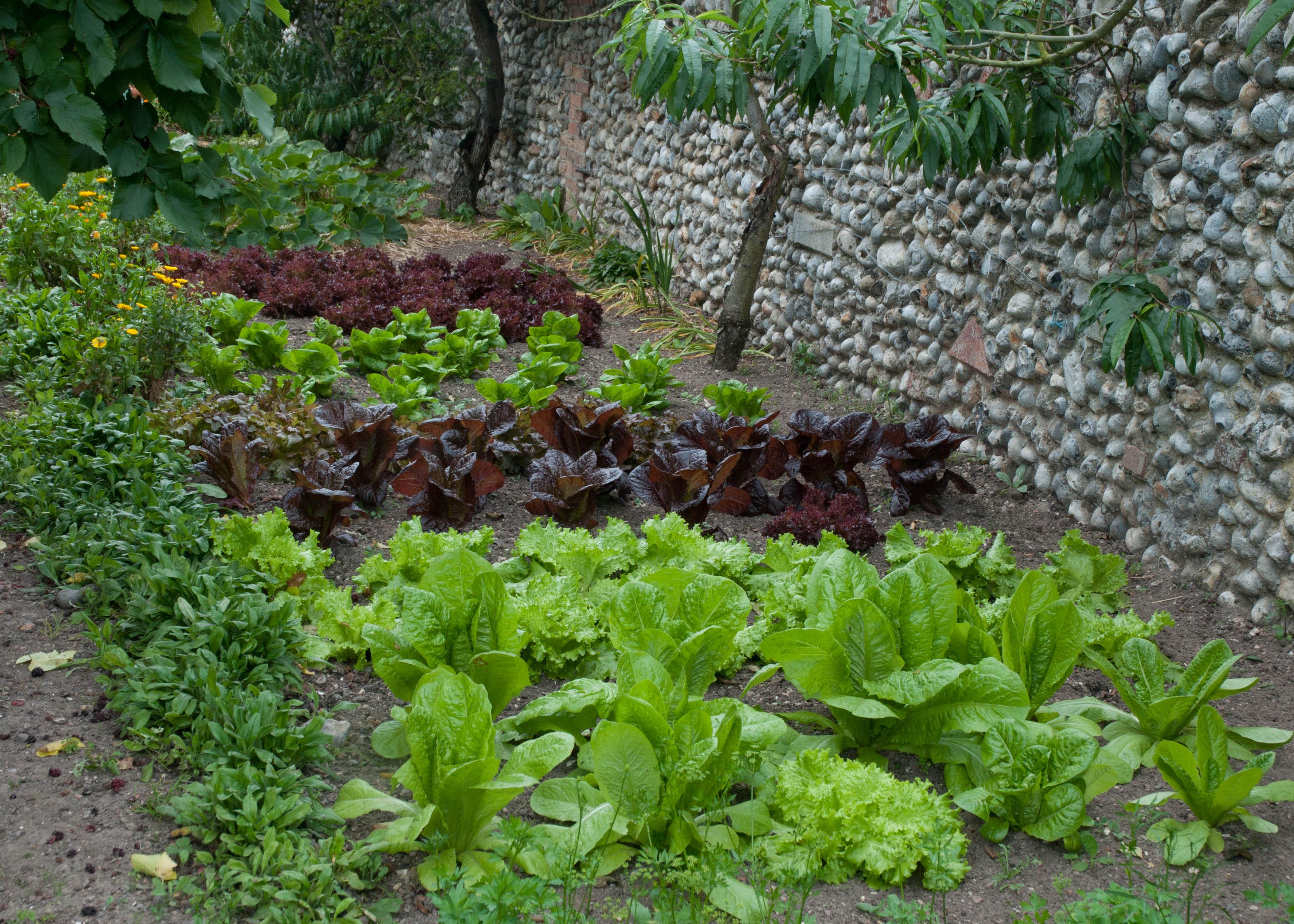 Jardins potager culture de vos l gumes et plantes for Culture des jardins