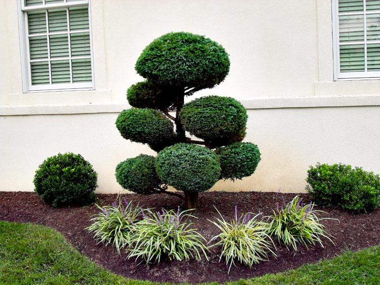 R alisation de plantations ham sur heure nalinnes gerpinnes arbres et fleurs - Plantation d arbres synonyme ...